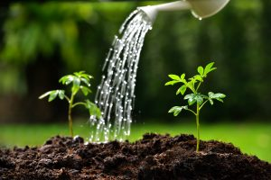 Tips To Keep Your Plants Watered This Summer