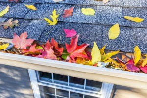 Keep your gutters clean this fall!