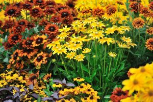 5 Types Of Fall Flowers