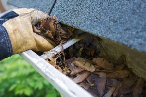 Why You Should Have Your Gutters Cleaned This Summer